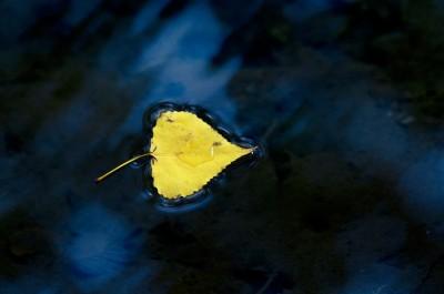 Fotografia di una foglia gialla che galleggia su acqua blu