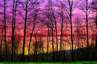Silhouttes di alberi spogli al tramonto con filtro digradante magenta giallo