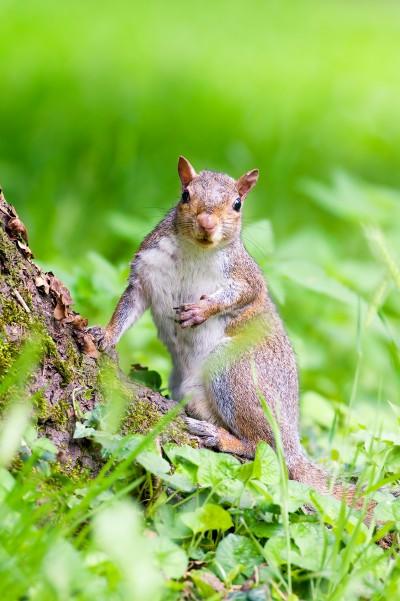 Fotografare gli scoiattoli nei boschi con la reflex