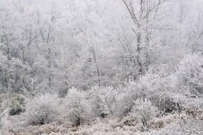 Ritrarre il paesaggio imbiancato dal gelo in inverno