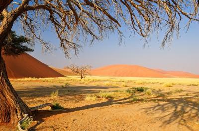 Foto di viaggio ombra creativa di albero a Soussusvleid in Namibia
