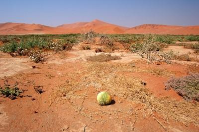 Fotografare il deserto del Namib la siccità e prove di adattamento vegetale