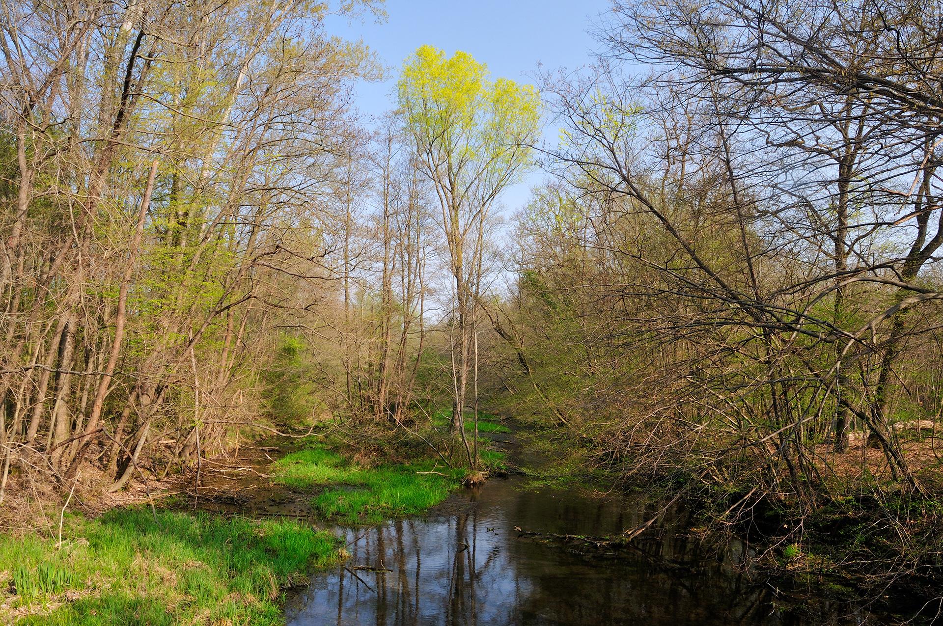 Immagini di primavera