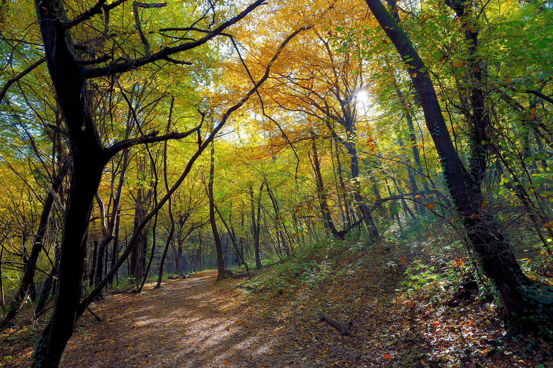 Fotografia sentiero nel bosco