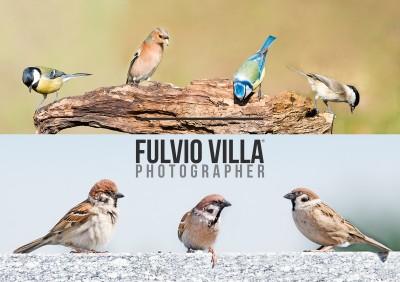 Fotografare-la-natura